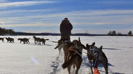 Winterdosen in Lappland