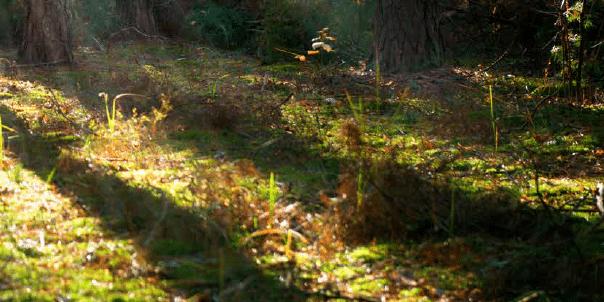 Der Waldknigge Teil Eins: Das Suchen