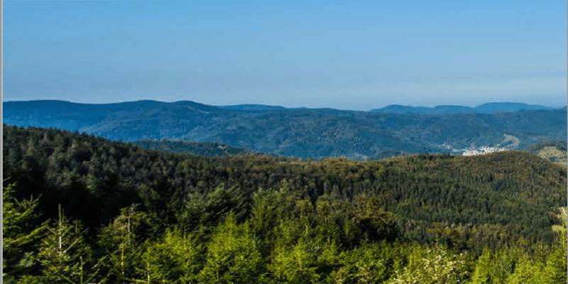 Nördlicher Schwarzwald – Eremit, Zebramat und hausgemachte Spätzle