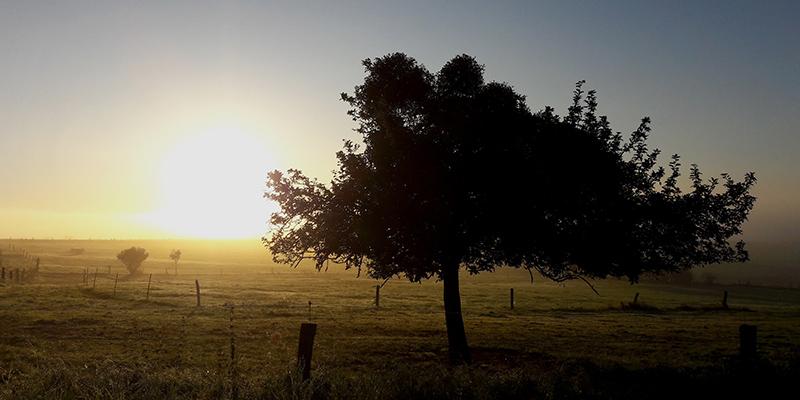 Baum auf Koppel vor Sonnenuntergang