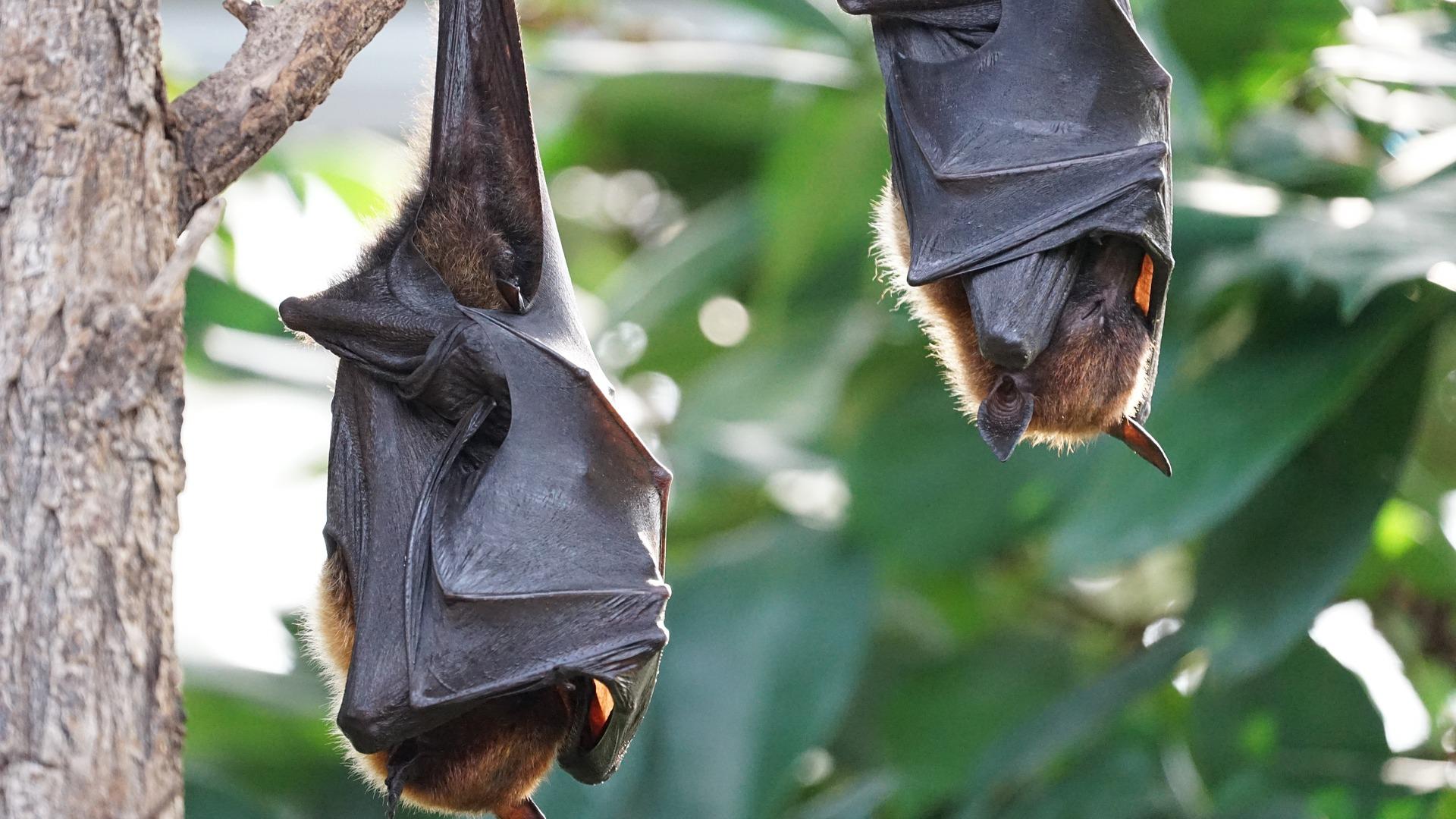 Fledermausschutz: Obacht beim Geocachen